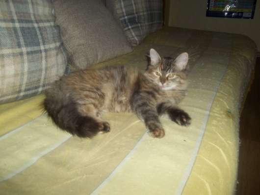 котенок в добрые руки в Пензе Фото 1