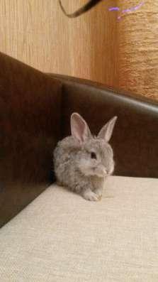 Кролик (2мес) + клетка в Новосибирске Фото 2