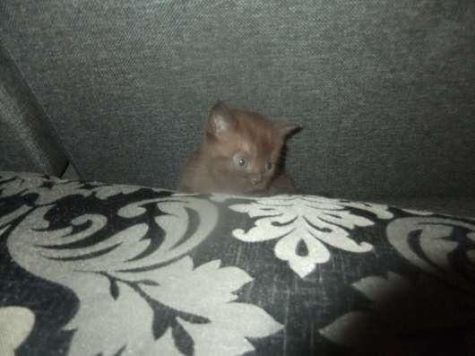 котята в Смоленске Фото 2