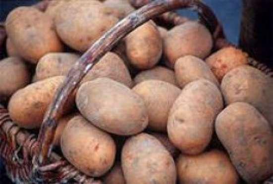Продам деревенский картофель в Волоколамске Фото 3