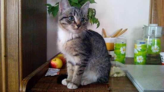 Отдадим в хорошие руки котят, кто действительно их любит