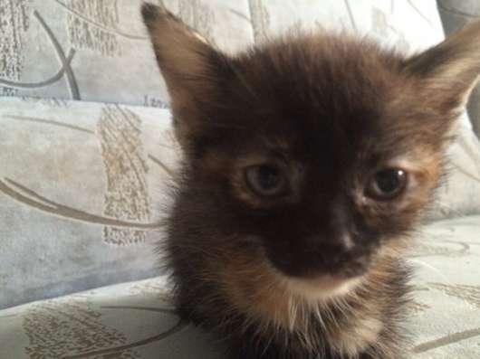 Отдам котят! в Екатеринбурге Фото 5