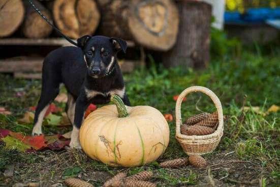 Достойная собака для достойного человека в Сергиевом Посаде Фото 3