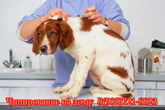 Чипирование животных в Москве. Выезд на  дом