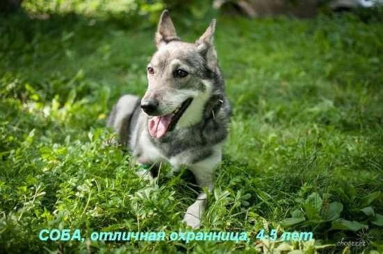 Собаки-гиганты, охранники для дома или предприятия в Екатеринбурге Фото 1