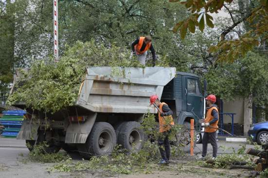 Спил, кронирование, валка деревьев в Белгороде Фото 5