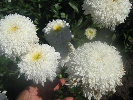 Саженцы садовых растений и цветов
