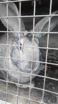 Кролики мясных пород в Омске Фото 2