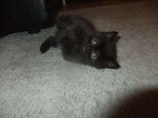 котята в Смоленске Фото 3