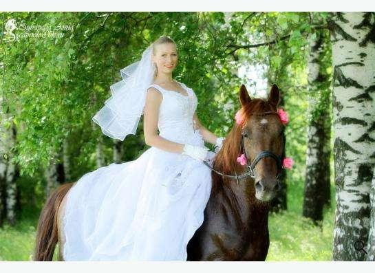 Фотосессии с лошадьми и пони